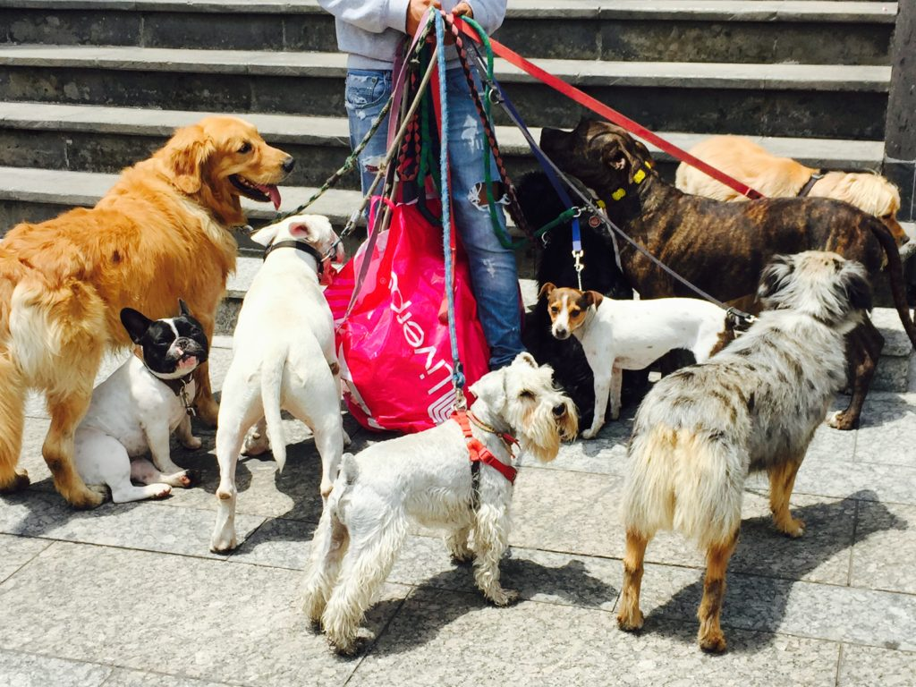 Dogs in Polanco, Mexico City
