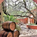Our First Winery Visit in Mexico: Puerta del Lobo