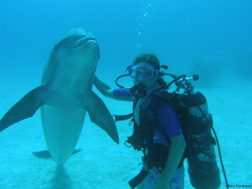 Dolphin Dive in the open ocean with UNEXSO Dolphin Experience, Grand Bahamas Island.